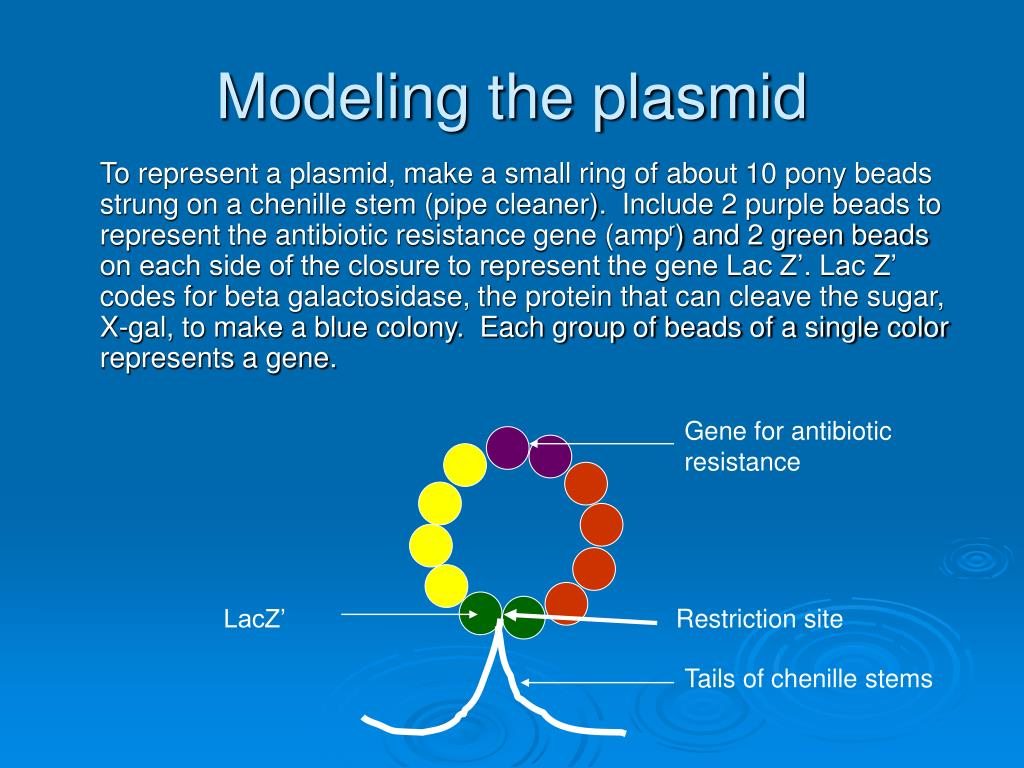 Modeling the plasmid
