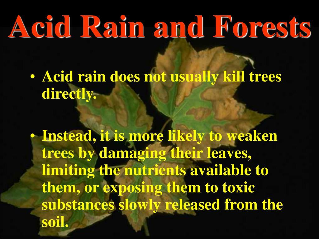 Acid Rain and Forests
