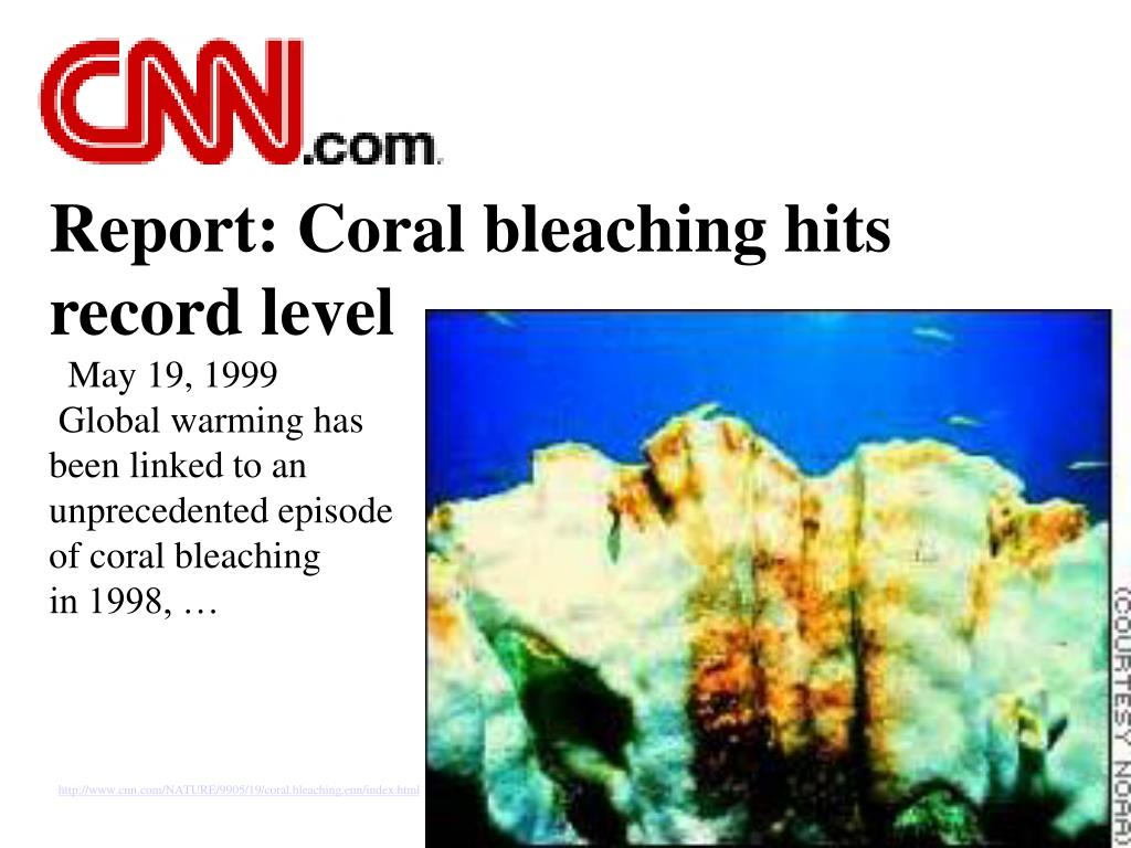 Report: Coral bleaching hits record level