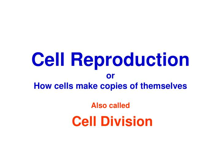 cell reproduction or how cells make copies of themselves n.