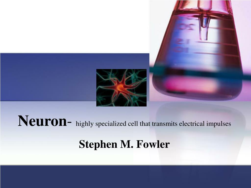 neuron highly specialized cell that transmits electrical impulses l.