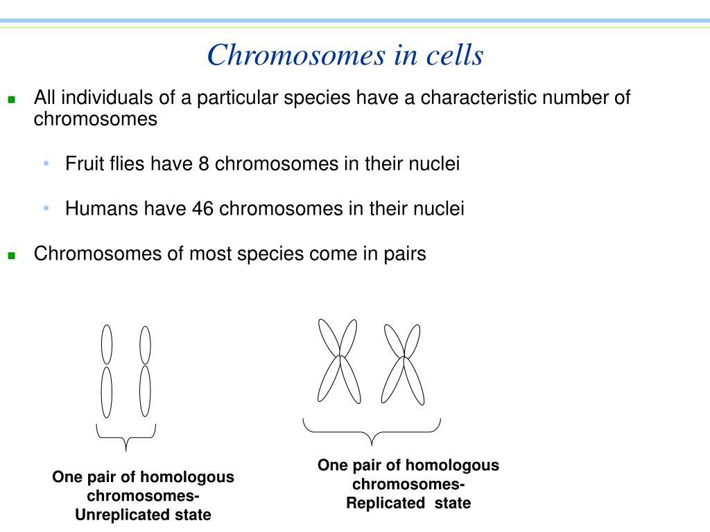 Chromosomes in cells