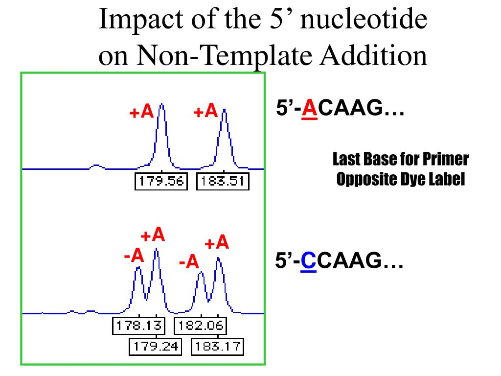 Impact of the 5' nucleotide on Non-Template Addition