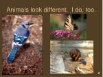 animals look different i do too