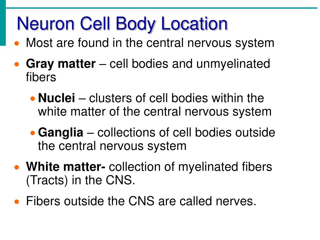 Neuron Cell Body Location