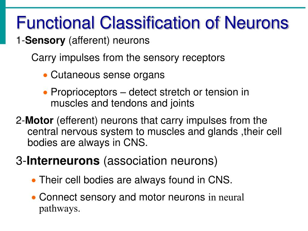 Functional Classification of Neurons