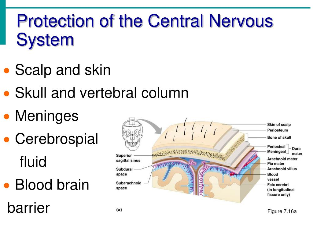 Protection of the Central Nervous System