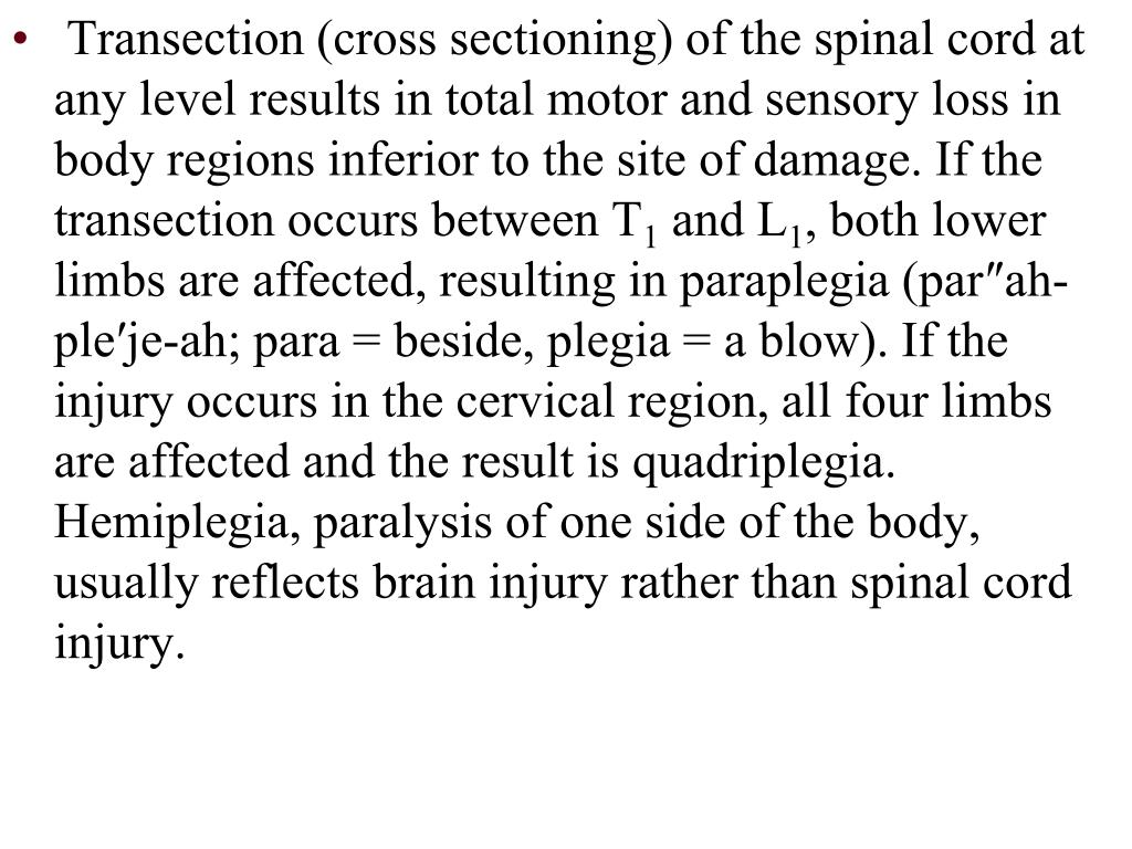 Transection (cross sectioning) of the spinal cord at any level results in total motor and sensory loss in body regions inferior to the site of damage. If the transection occurs between T