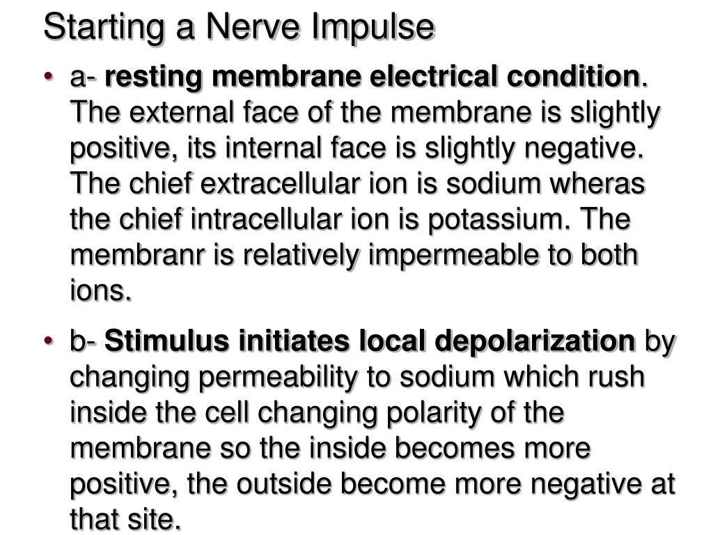 Starting a Nerve Impulse