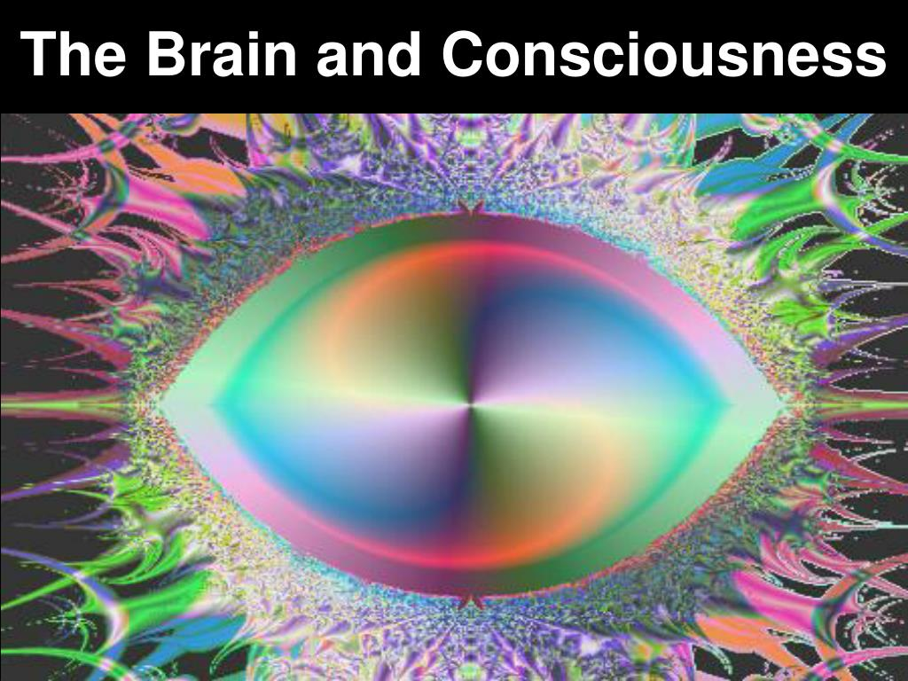 The Brain and Consciousness