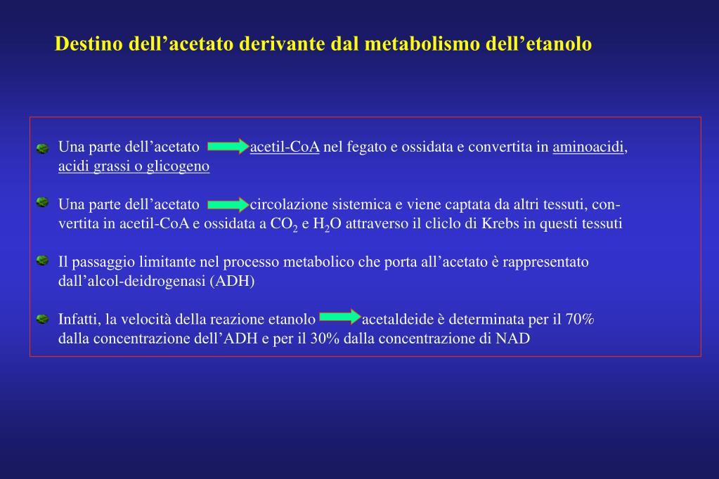 Destino dell'acetato derivante dal metabolismo dell'etanolo