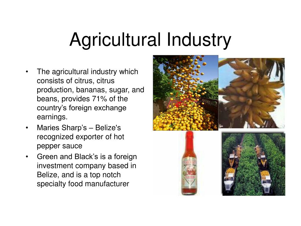 The agricultural industry which consists of citrus, citrus production, bananas, sugar, and beans, provides 71% of the country's foreign exchange earnings.