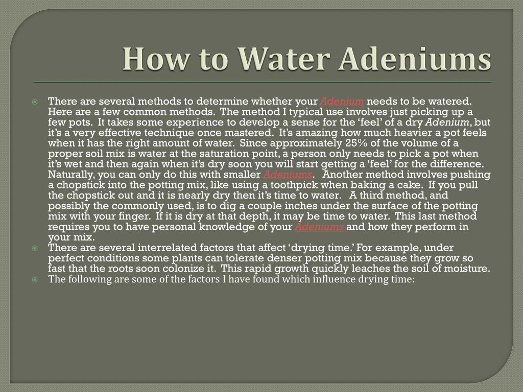 How to Water Adeniums