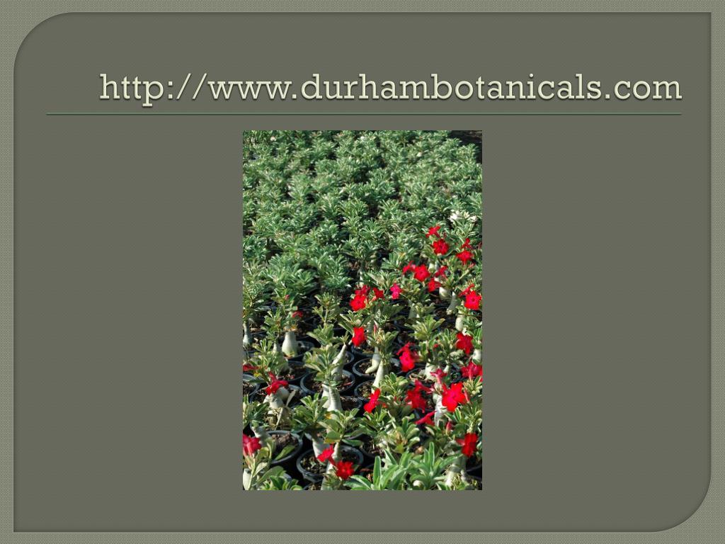http://www.durhambotanicals.com