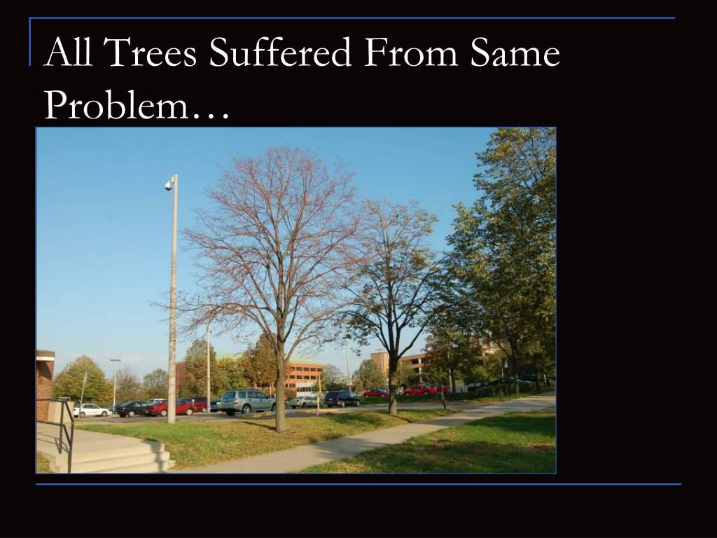 All Trees Suffered From Same Problem…