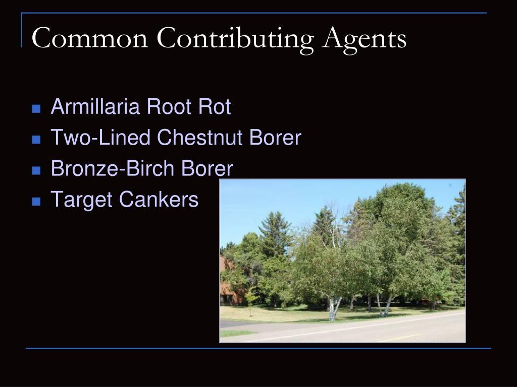 Common Contributing Agents