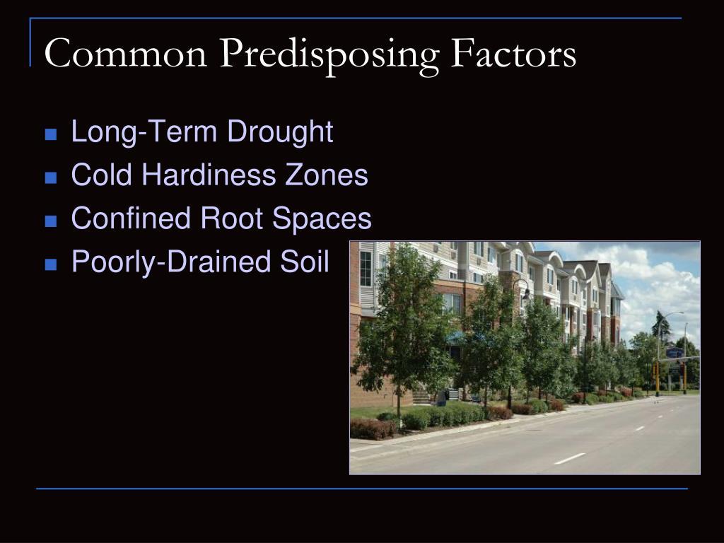 Common Predisposing Factors