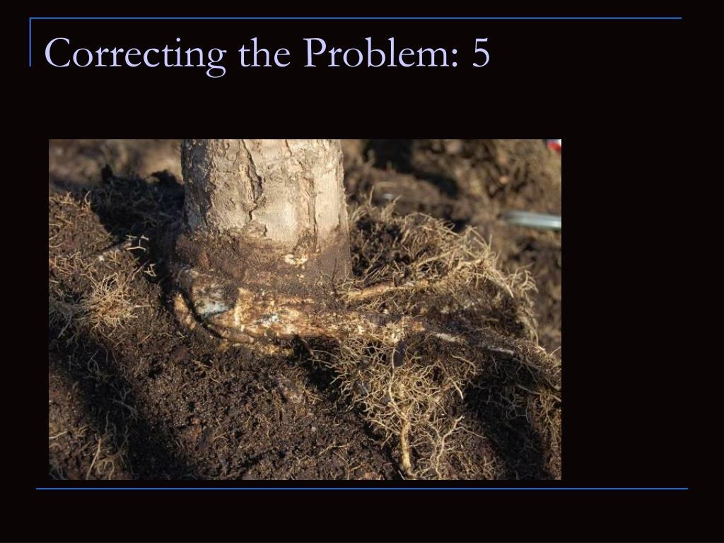Correcting the Problem: 5