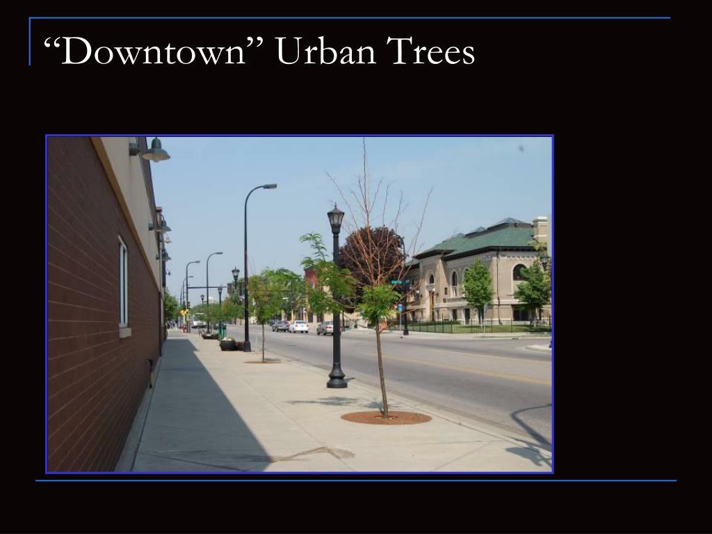 """Downtown"" Urban Trees"