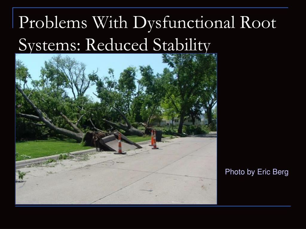Problems With Dysfunctional Root Systems: Reduced Stability