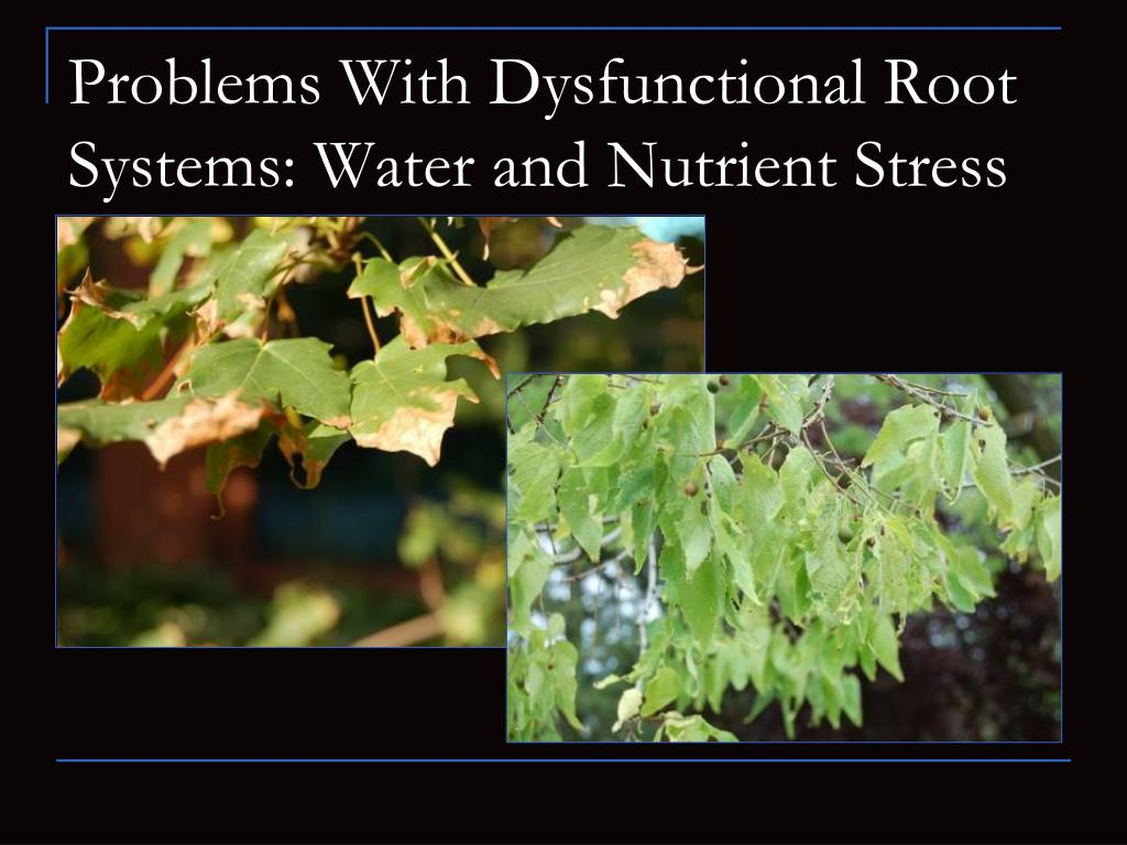 Problems With Dysfunctional Root Systems: Water and Nutrient Stress