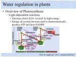 water regulation in plants2