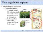 water regulation in plants7