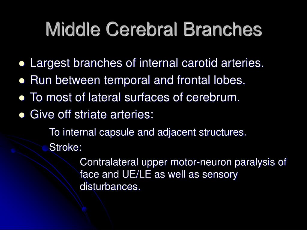 Middle Cerebral Branches