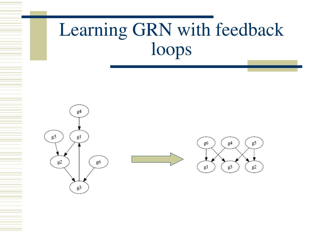 Learning GRN with feedback loops
