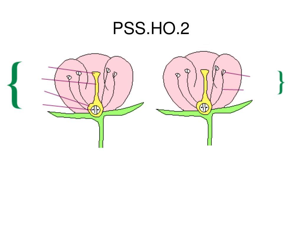 PSS.HO.2