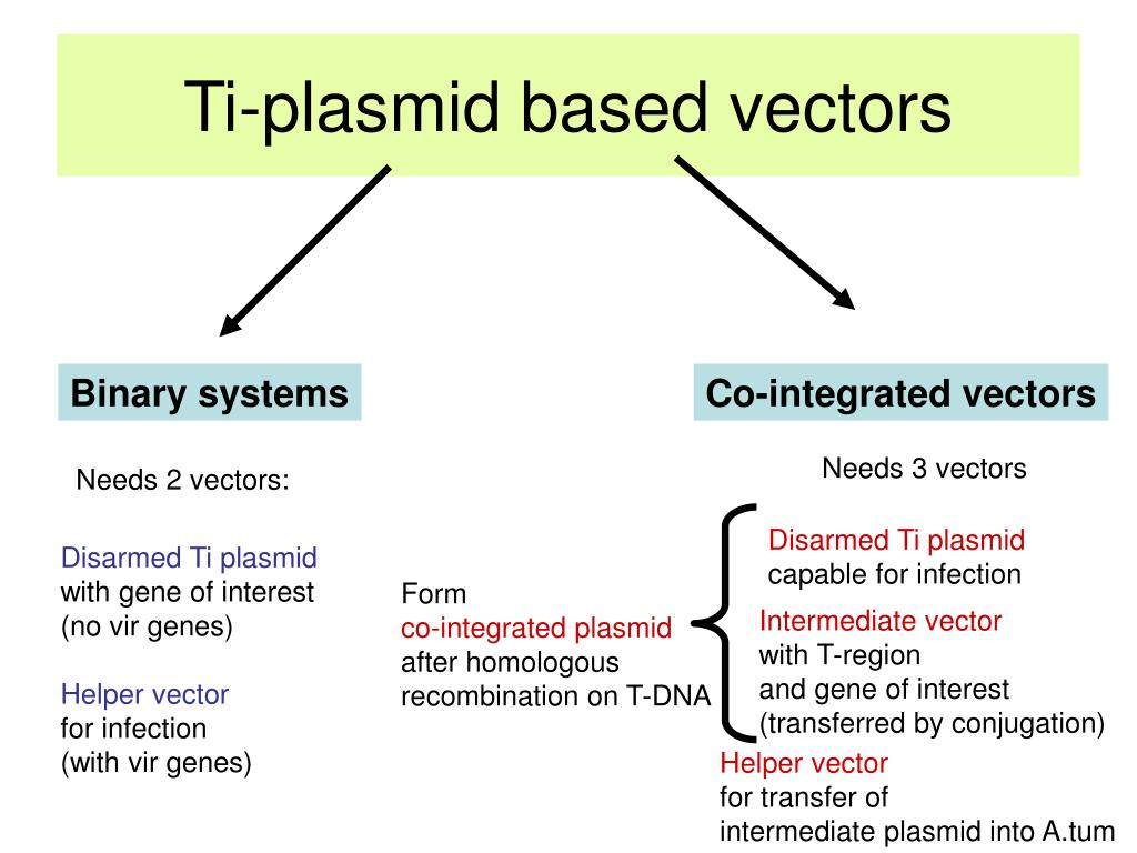 Ti-plasmid based vectors