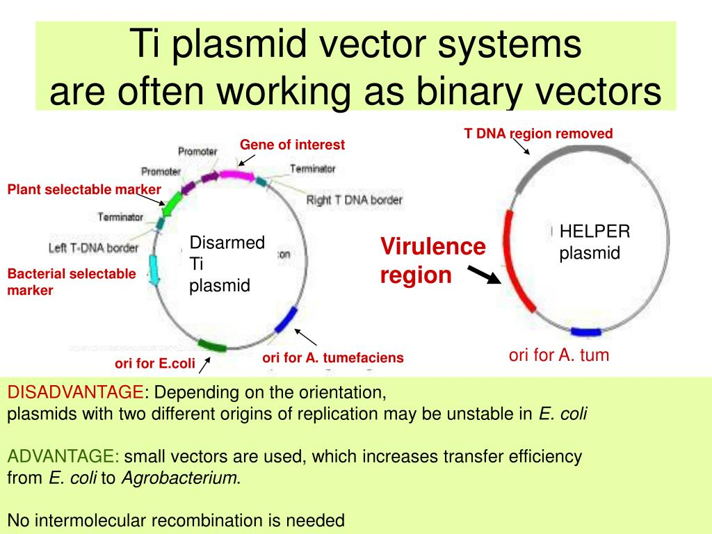 Ti plasmid vector systems