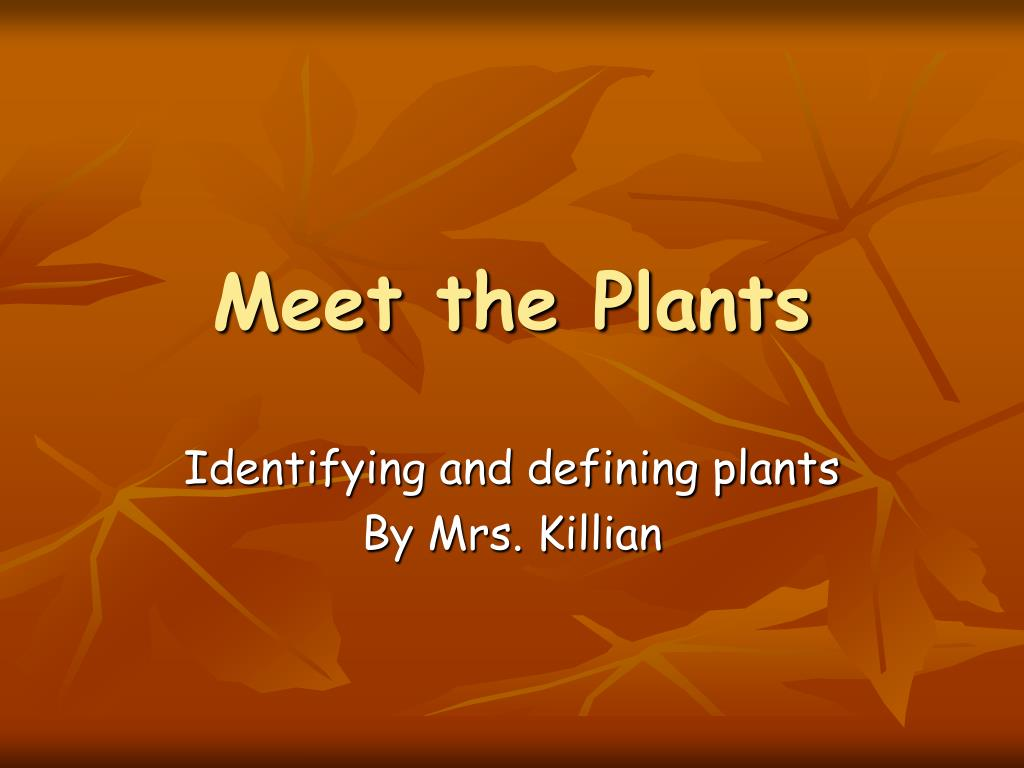 meet the plants l.