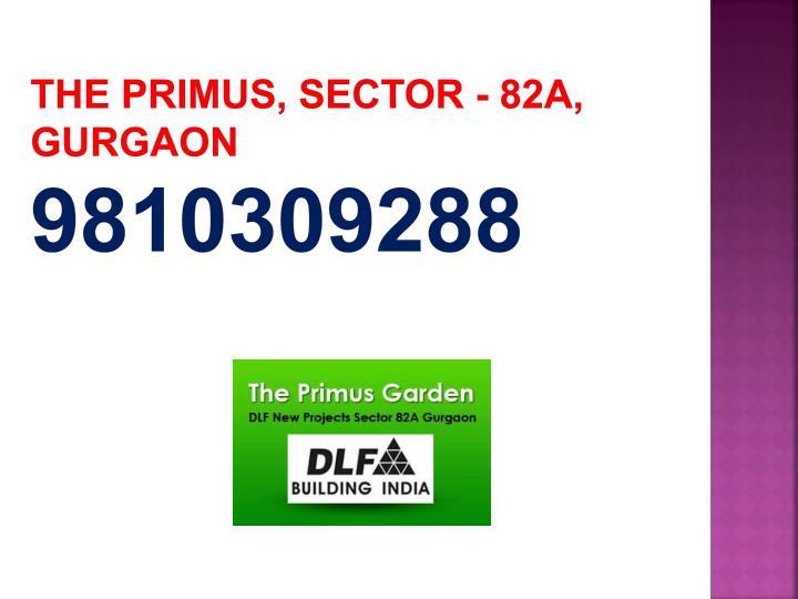 the primus sector 82a gurgaon 9810309288 n.