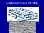 rough endoplasmic reticulum14