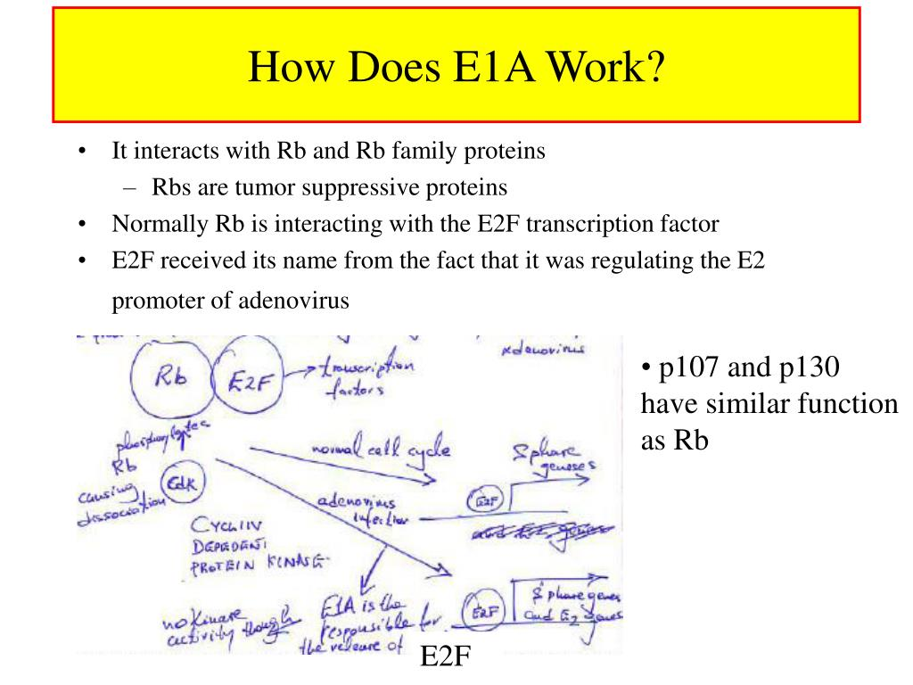 How Does E1A Work?