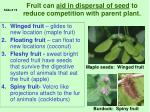fruit can aid in dispersal of seed to reduce competition with parent plant