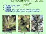 gymnosperms naked seed