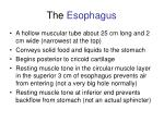 the esophagus47