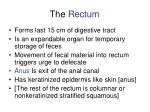 the rectum