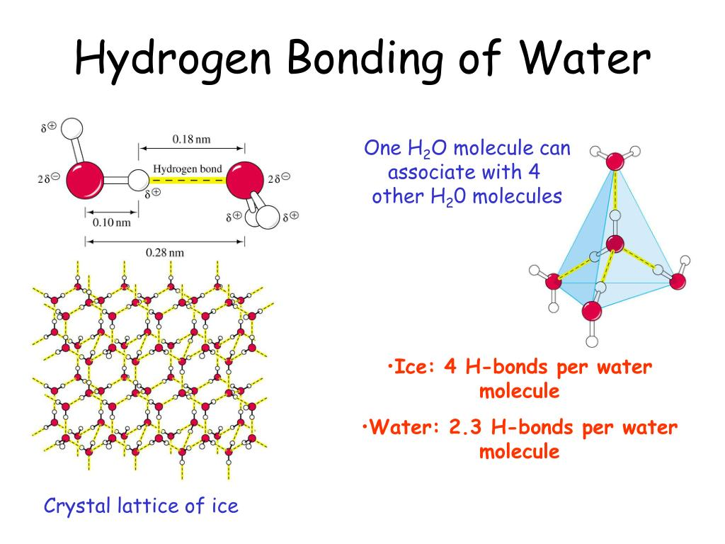 Hydrogen Bonding of Water