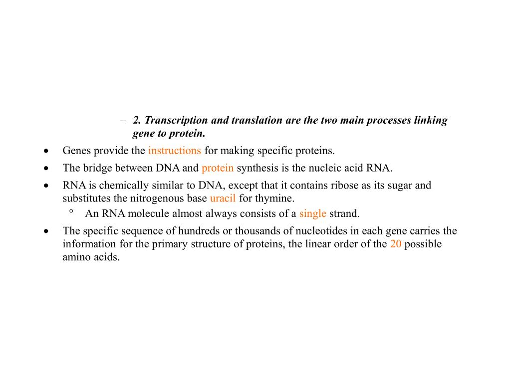 2. Transcription and translation are the two main processes linking gene to protein.
