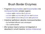 brush border enzymes