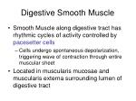 digestive smooth muscle