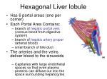 hexagonal liver lobule