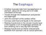 the esophagus46