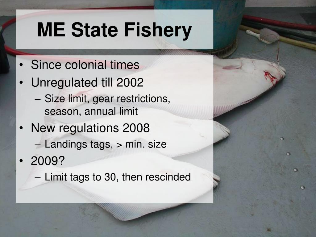 ME State Fishery