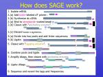 how does sage work