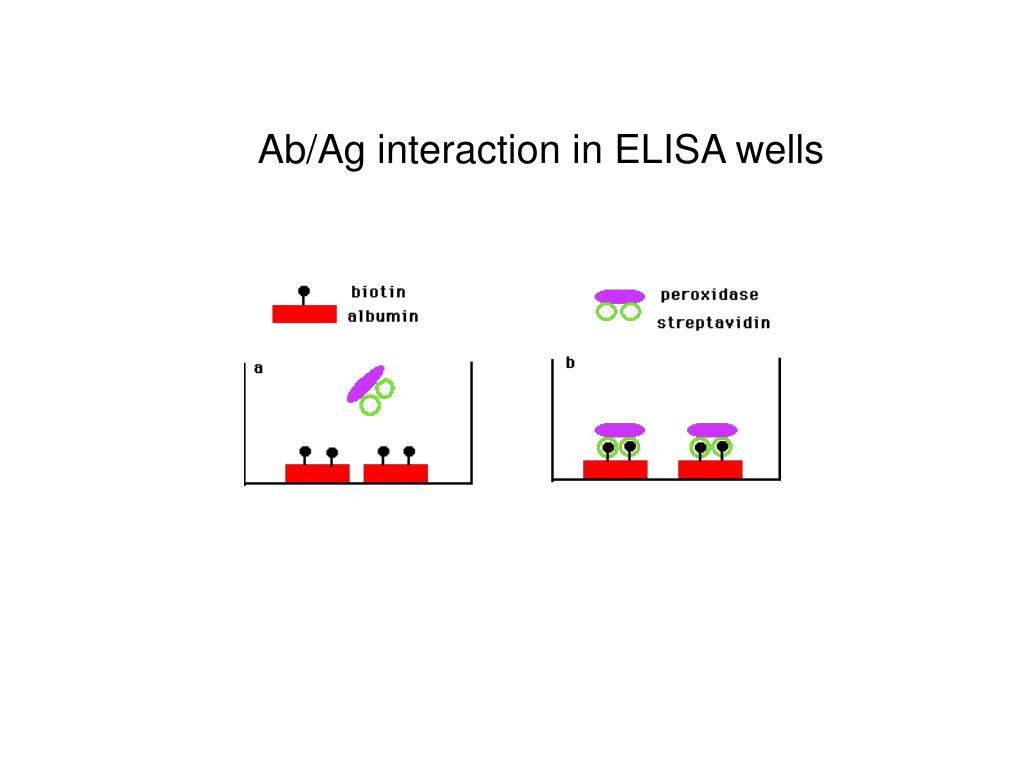 Ab/Ag interaction in ELISA wells