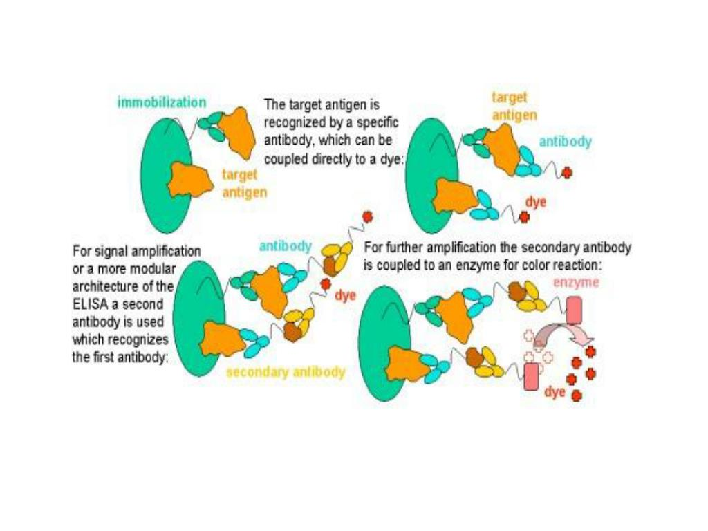 Enzyme linked immusorbent assay (ELISA)